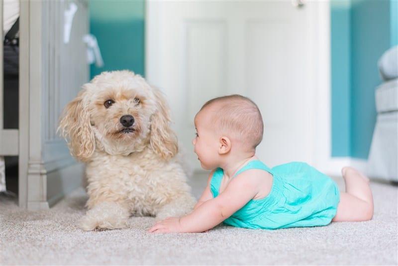 תינוק משחק עם כלב