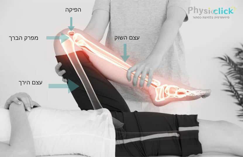 מפרק הברך ועצם הירך
